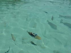 ile-des-pins-baie-d-oro-piscine-naturelle-3.jpg