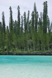 ile-des-pins-baie-d-oro-piscine-naturelle-5.jpg