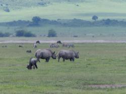 ngorongoro-rhinoceros.jpg