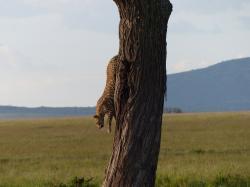 serengeti-leopard-3.jpg